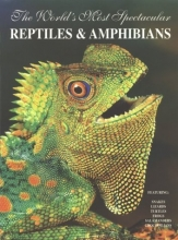 The World's Most Spectacular Reptiles and Amphibians