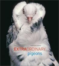Extraordinary Pigeons