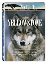 Nature: Yellowstone