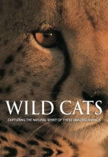 Wild Cats: Capturing the Natural Spirit of These Amazing Animals